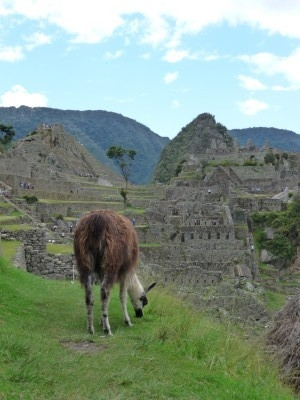 Lawn Mower at Machu Picchu