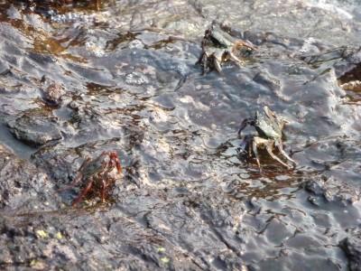 Crabs.... just crabs